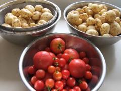ジャガイモ・トマト食べました