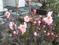 心も春爛漫と