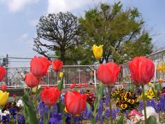 春はいろいろ